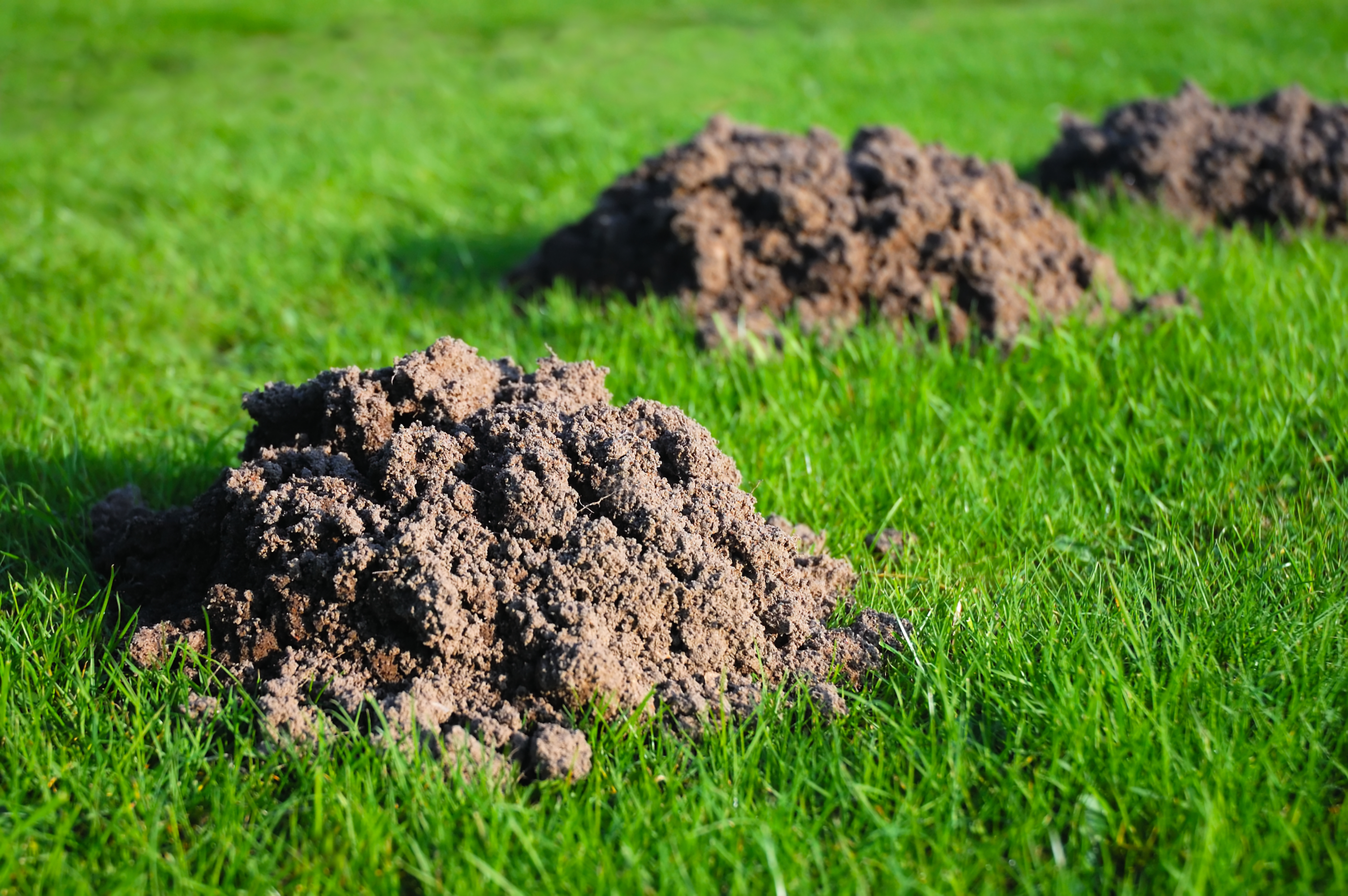 How to get rid of ground moles - How Does An Artificial Lawn Stand Up Against Moles