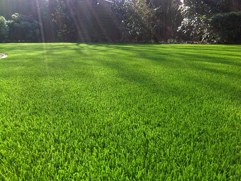 Cheap artificial grass low cost artificial grass royal for Tall outdoor grasses